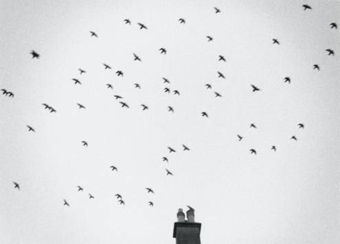 Birds over Terrace