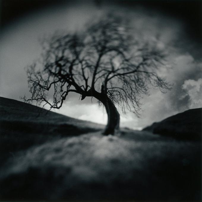 J Connelly Untitled Tree, Selenium toned darkroom print