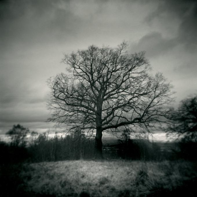 j_connelly_holga__tree_untoned
