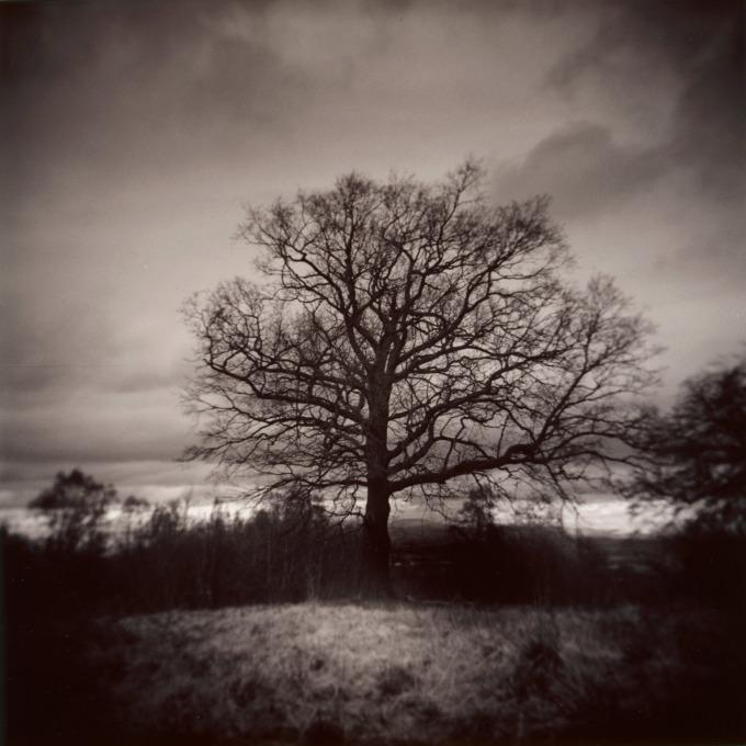 j_connelly_holga_tree_selenium