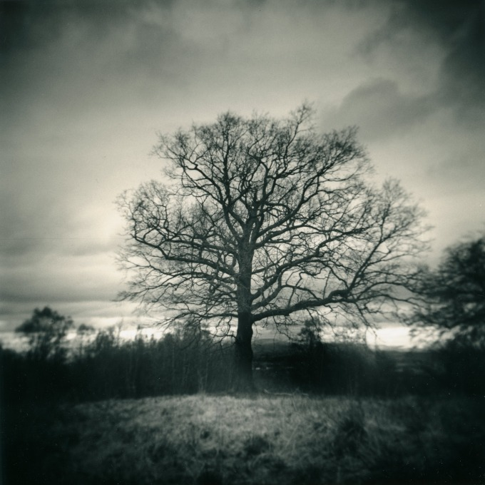 j_connelly_holga_tree_sepia