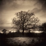 J Connelly Untitled Oak, Sepia and Selenium toned darkroom print